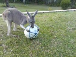 Errea Kangaroo