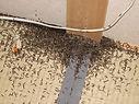 羽アリ,ハネアリ,羽蟻,シロアリ,白蟻,白あり,白アリ
