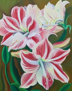Pink striped lilly.jpg