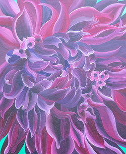 Purple Chrysanthenum.jpg