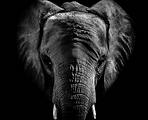 Wassa Elephant.PNG