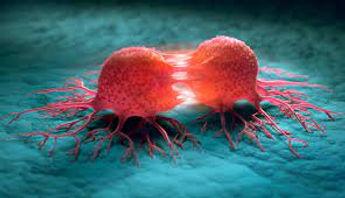 Solid Tumor.jpg