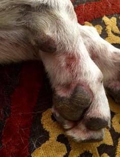 Hot Spots on Pugs