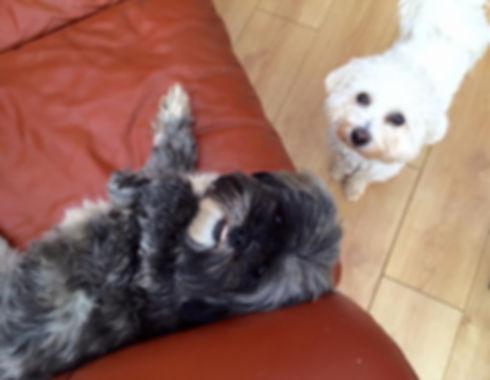 Northampton Small Dog Daycare