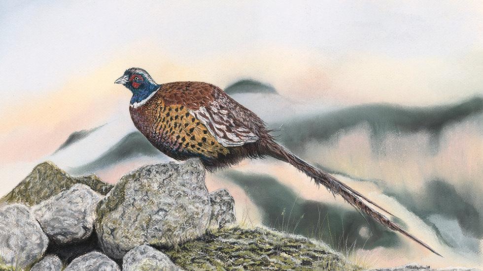 Highland Pheasant