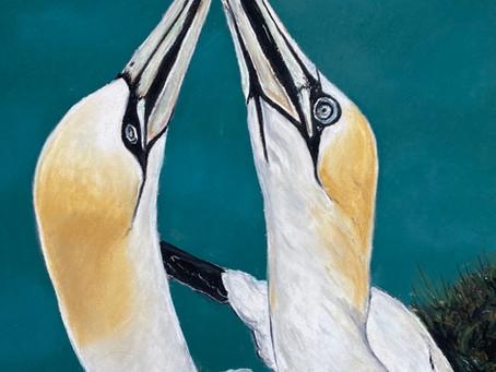 Kissing Gannets