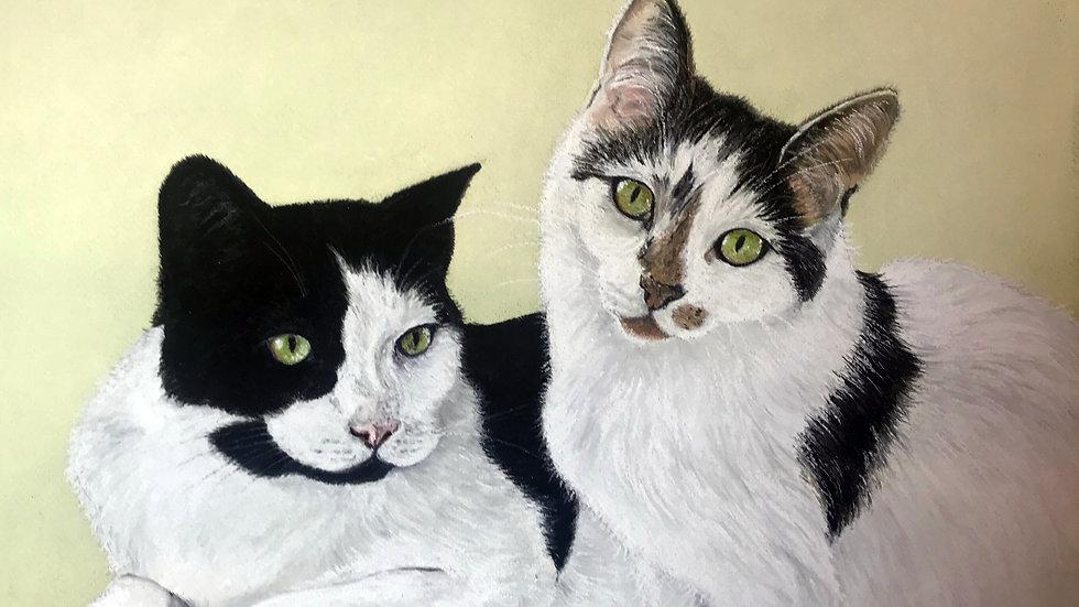 Pet Commission