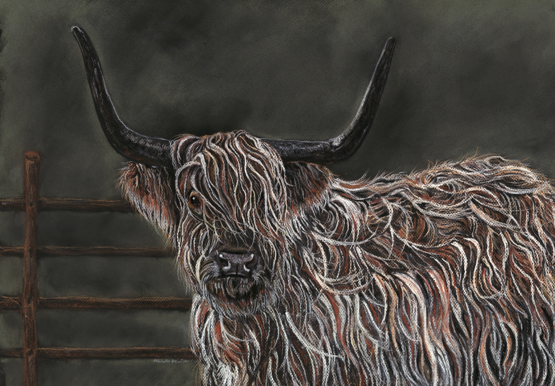Angus - The Highland Coo