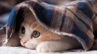 Feline Metathesiophobia