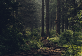 Field Notes: Forest Bathing & Fairy Encounters