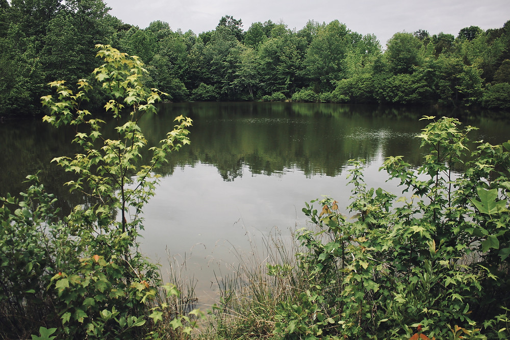 Large pond encircle by green trees