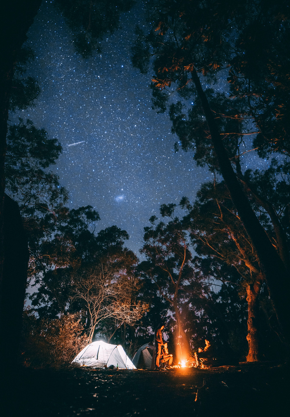 illuminated tent situated next to tall trees with a fire blazing at night under the stars