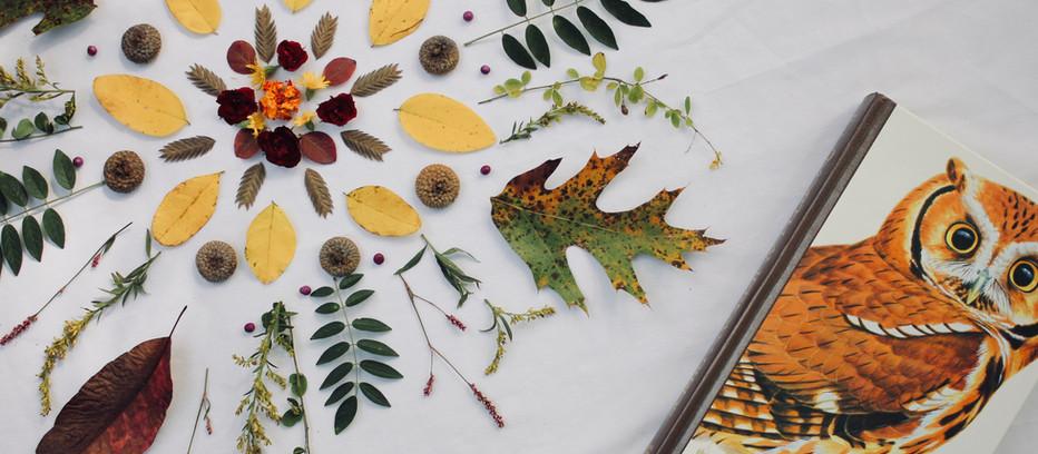 How to Make an Autumn Equinox Ritual
