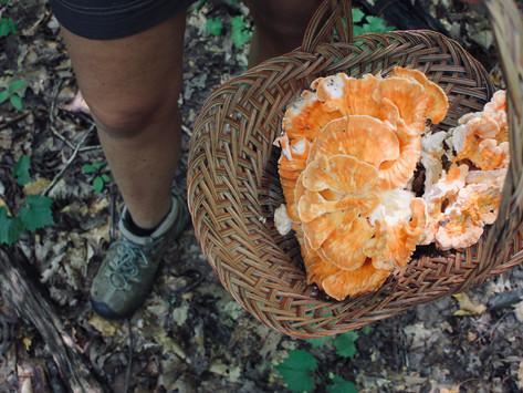 5 Wild Edible Mushrooms & Recipes