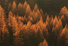 Celebrate Autumn Equinox: A Ritual of Release