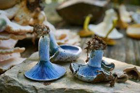 Mushroom Identification Guide - Part 1