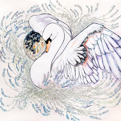 "12""x12"" Swan Art Print"