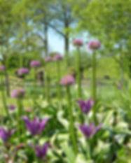 tuinen in Demen, bloembollen
