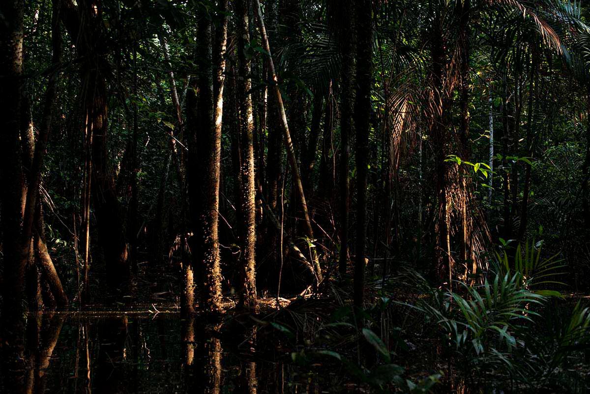 Amazônia Sutil_04
