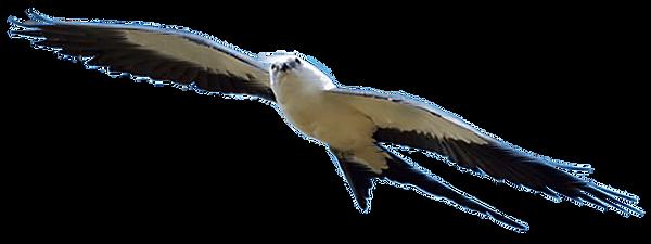 Segurança perimetral com Drones Raptor