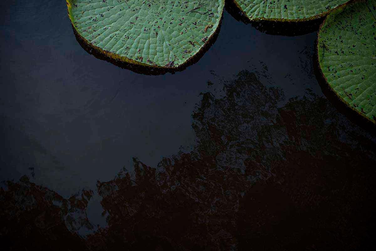 Amazônia Sutil_02