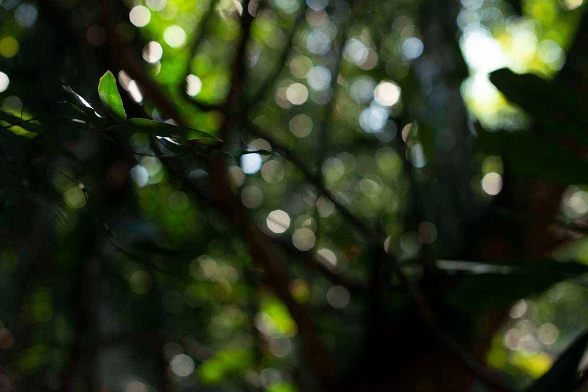 Amazônia Sutil_14