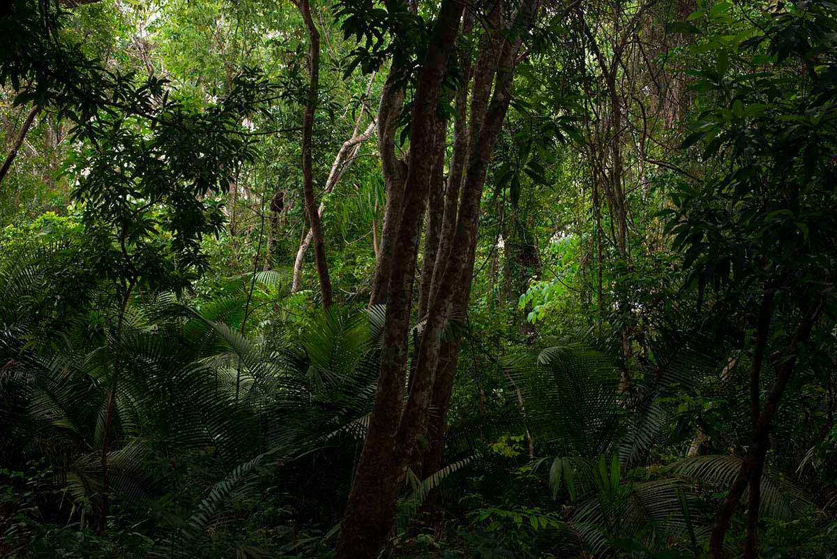 Amazônia Sutil_18