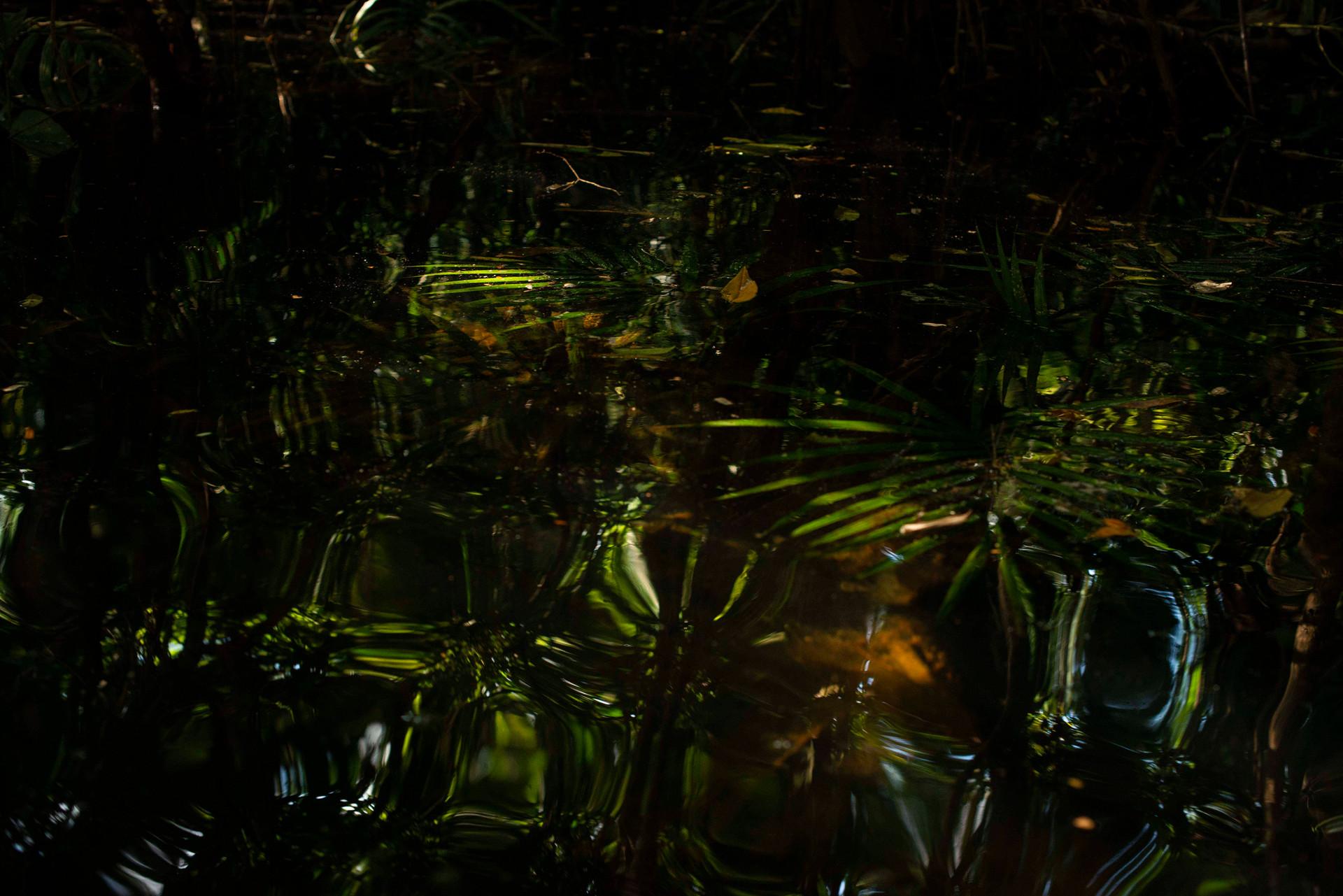 Amazônia Sutil_08