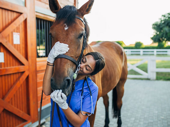 A first responder with her therapy horse in our Horses for Heroes workshop.
