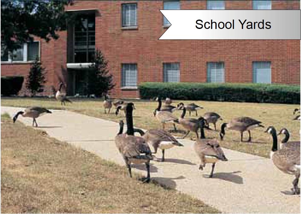 Goose Doctors LLC School Yard