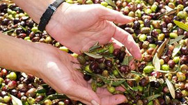 A Buyer's Beware On Olive Oil? You should get what you are paying for.