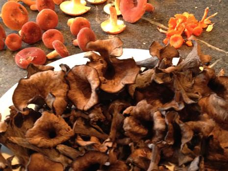 A Morning of Mushrooms