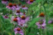 flowers joan.jpg