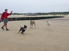 Unsere Hunde-Ferien am Strand