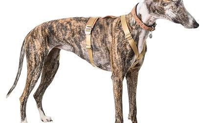 Brustgeschirr für Windhunde