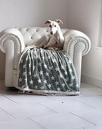 Windhund Boutiqu - www.galgo.shop