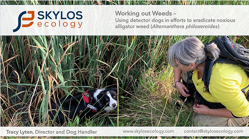 skylos_ecology_alligator_Weed_EIANZ