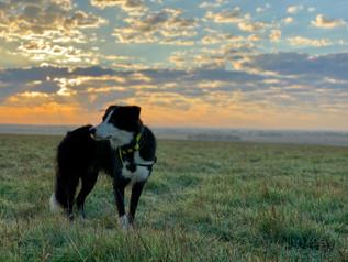 skylos_ecology_jimmy_sunrise_detection_d
