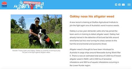 Oakley_alligator_weed-NSW_DPI
