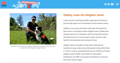 Oakley_alligator_weed-NSW_DPI