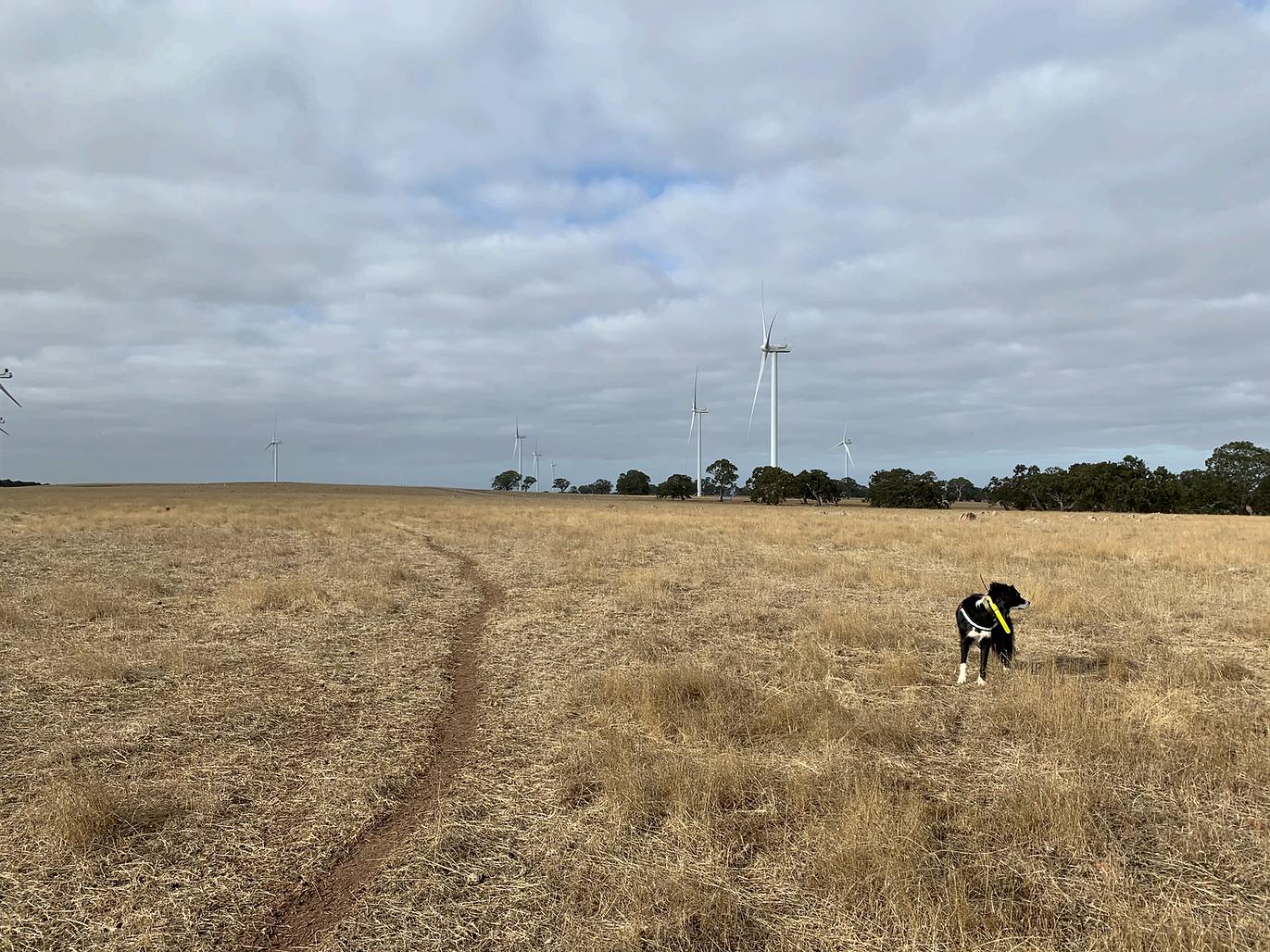 Skylos_Ecology_wind_Farm_dog_edited.png