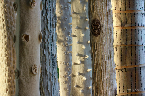 Light-trees.2013-2015