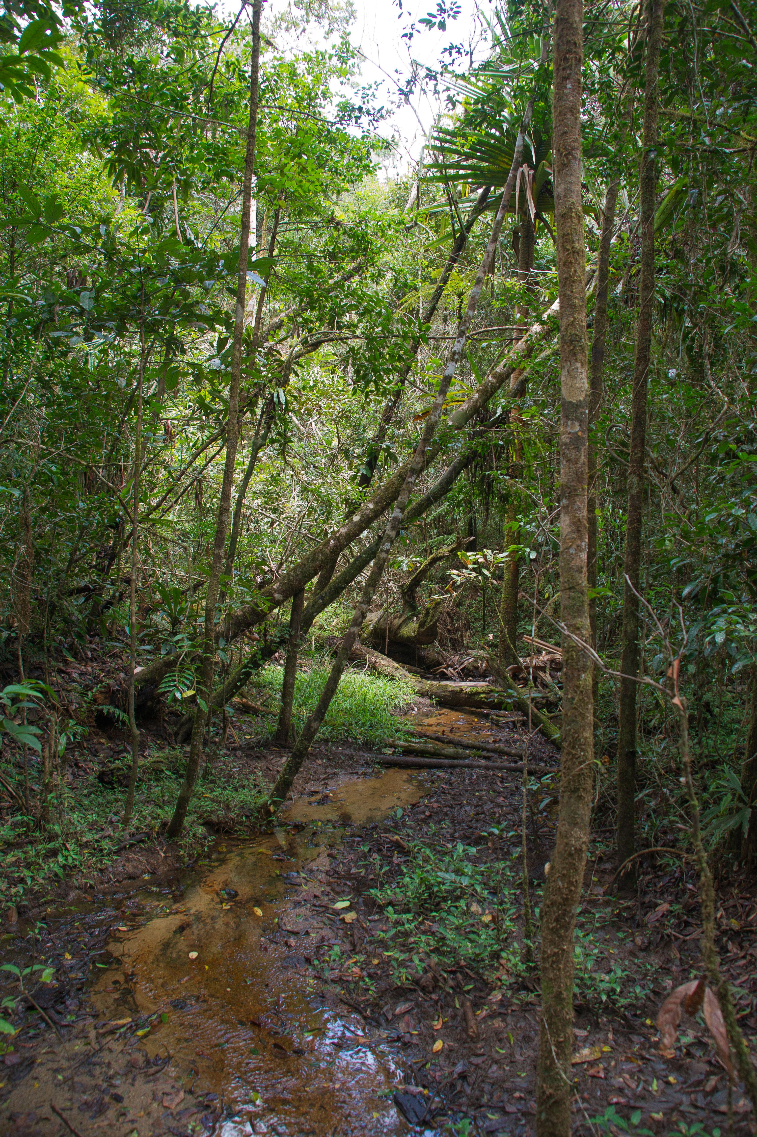 Ambiance de forêt de l'est