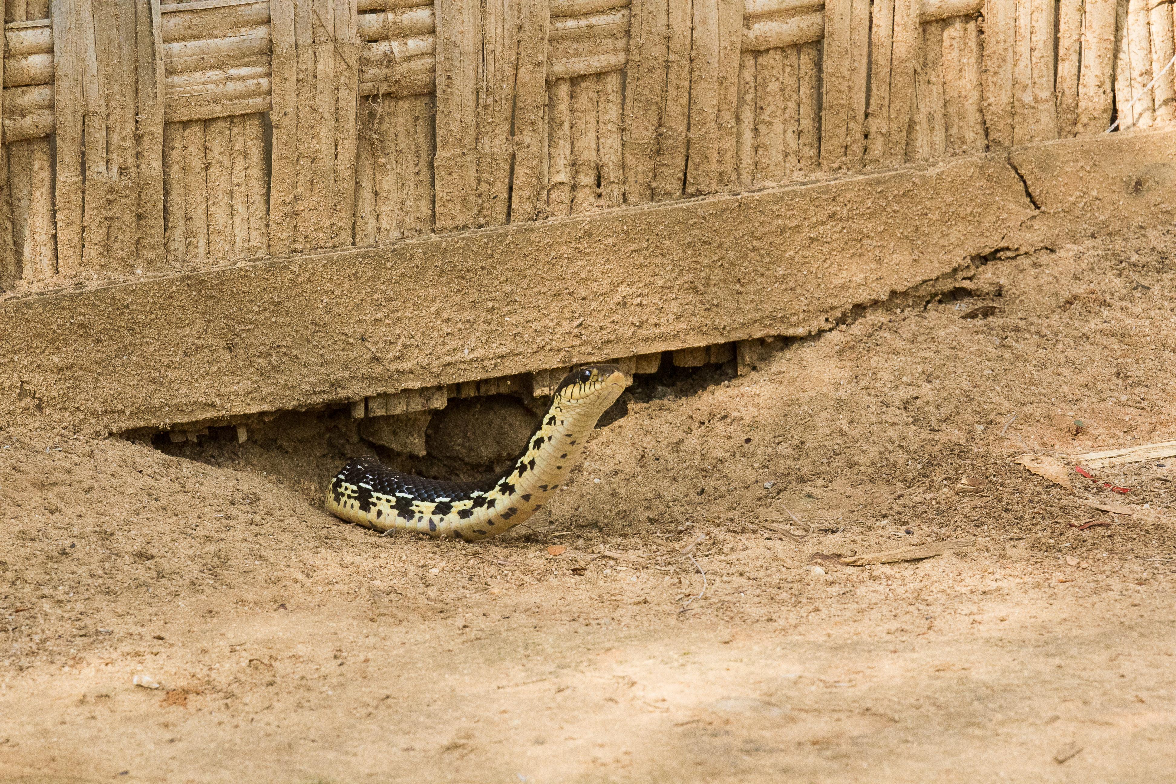 Un squater sous notre case!