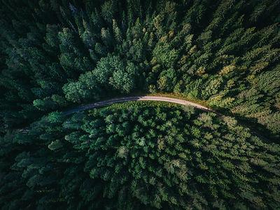forestabove.jpg