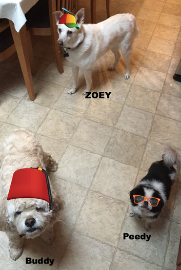 Peedy, Zoey and Buddy_edited.jpg