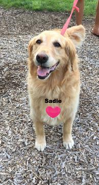 Sadie_edited.jpg