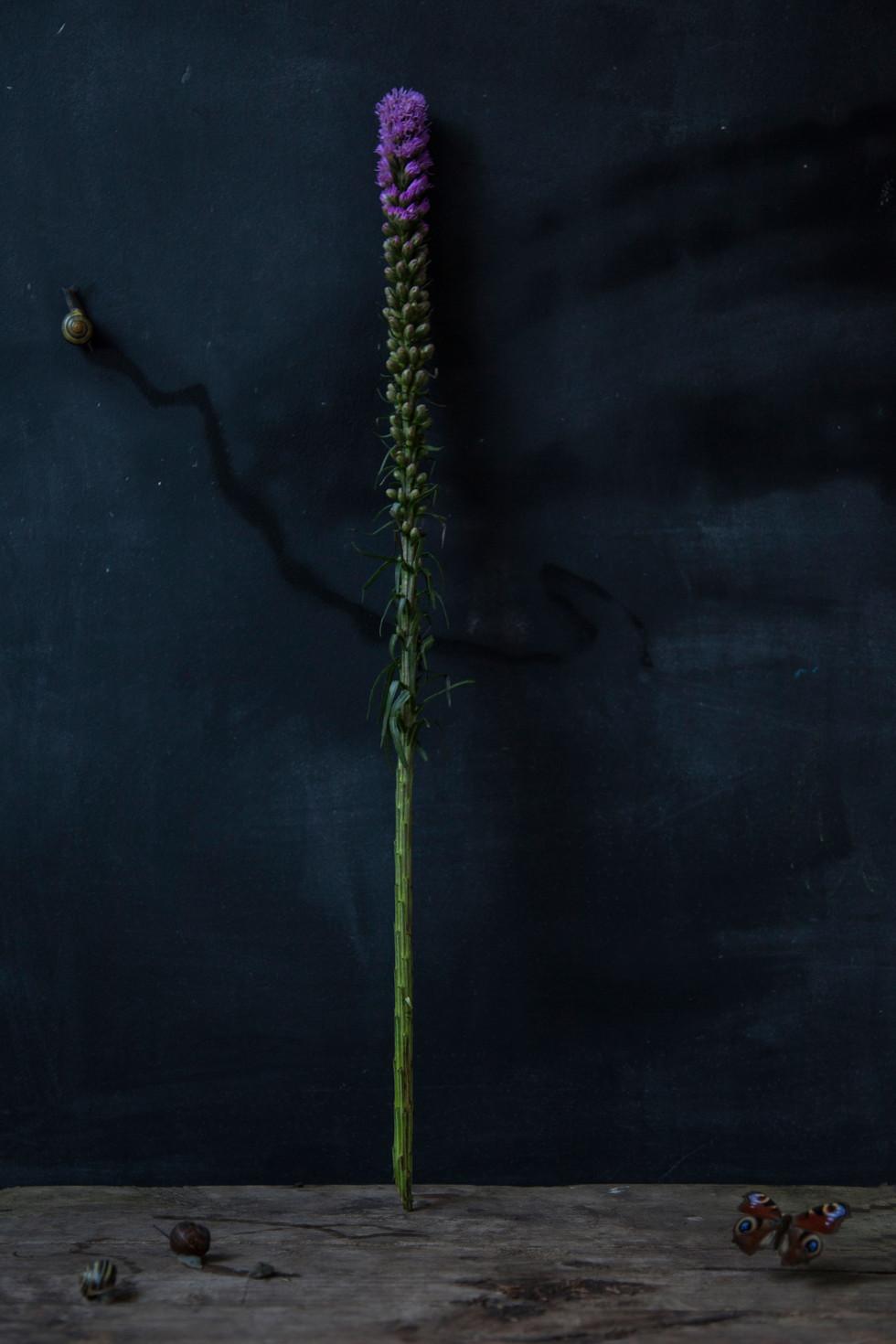 Fleur Longue