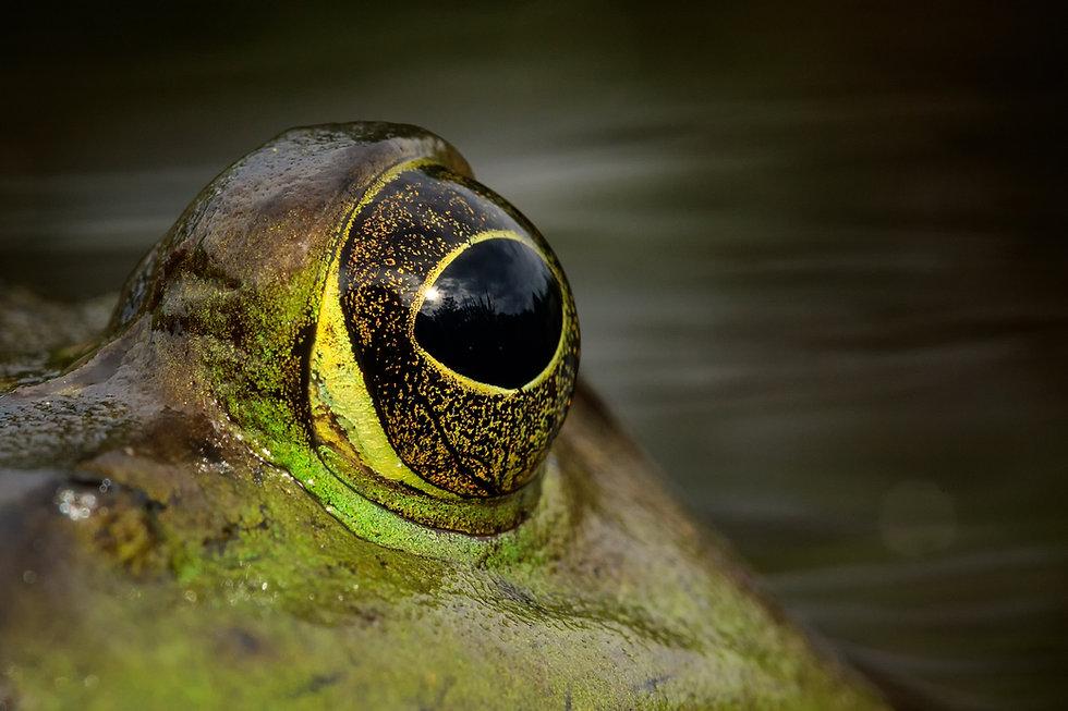 frog-eye.jpg