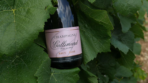 Buy grower producer champagnes from Dawe Wines.